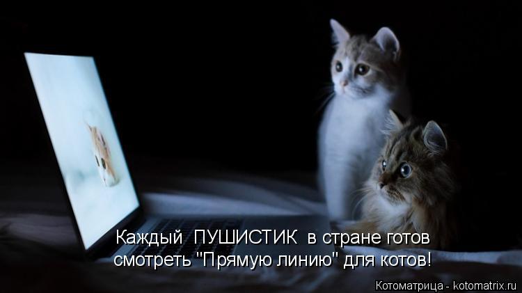 """Котоматрица: Каждый  ПУШИСТИК  в стране готов  смотреть """"Прямую линию"""" для котов!"""