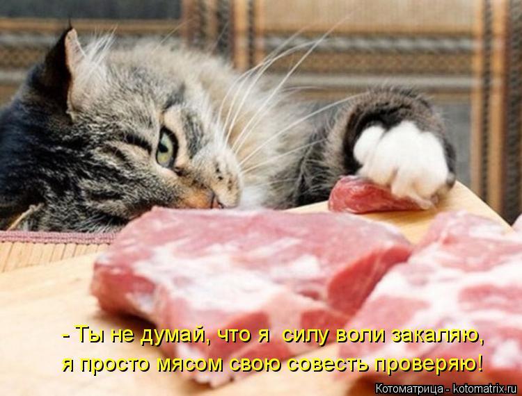 Котоматрица: - Ты не думай, что я  силу воли закаляю, я просто мясом свою совесть проверяю!