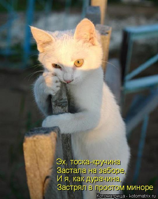 Котоматрица: Застрял в простом миноре И я, как дурачина,  Застала на заборе, Эх, тоска-кручина