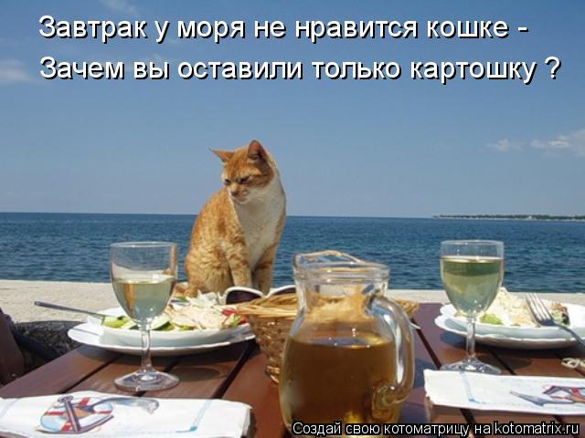 Котоматрица: Завтрак у моря не нравится кошке - Зачем вы оставили только картошку ?