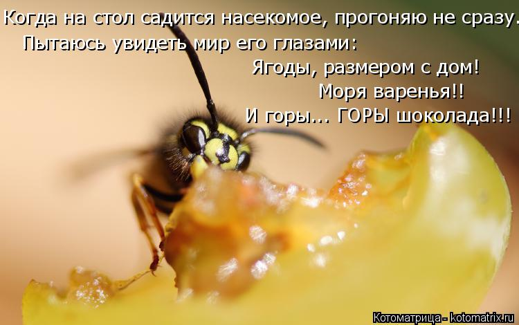 Котоматрица: Когда на стол садится насекомое, прогоняю не сразу... Пытаюсь увидеть мир его глазами: Моря варенья!! Ягоды, размером с дом! И горы... ГОРЫ шоко?