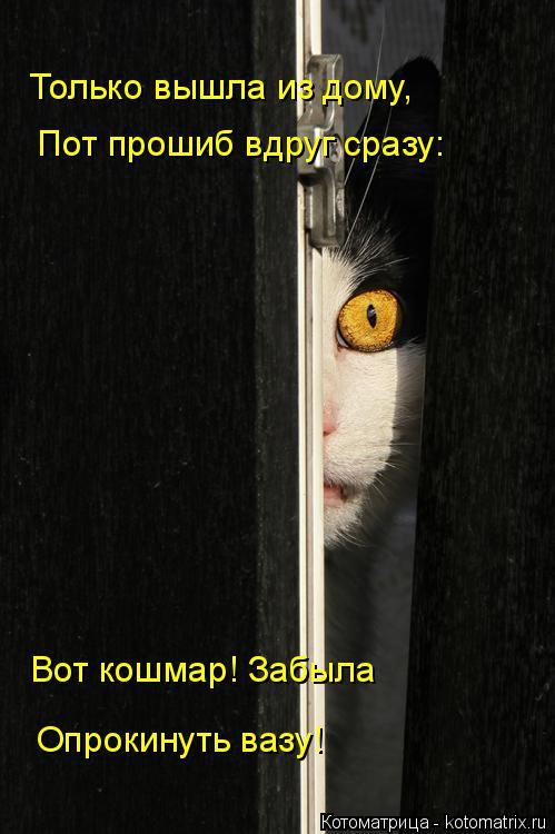 Котоматрица: Только вышла из дому, Пот прошиб вдруг сразу: Вот кошмар! Забыла Опрокинуть вазу!