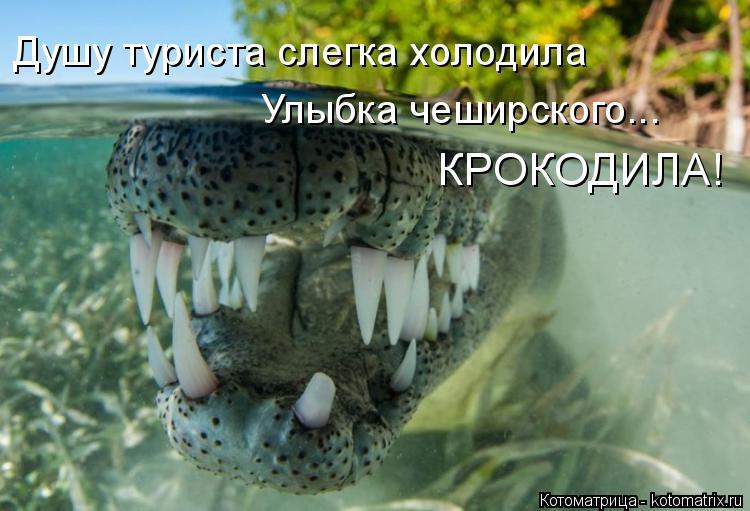 Котоматрица: Душу туриста слегка холодила Улыбка чеширского...  КРОКОДИЛА!