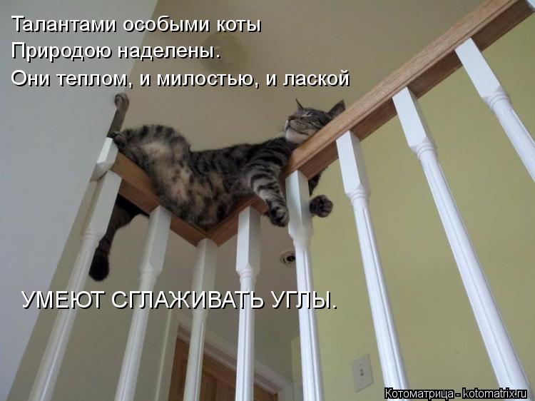 Котоматрица: Талантами особыми коты Природою наделены. Они теплом, и милостью, и лаской УМЕЮТ СГЛАЖИВАТЬ УГЛЫ.