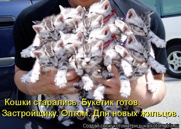 Котоматрица: Кошки старались. Букетик готов. Застройщику. Оптом. Для новых жильцов.
