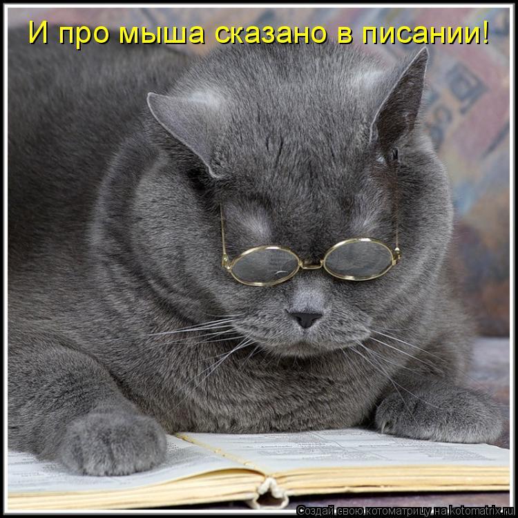 Котоматрица: И про мыша сказано в писании!