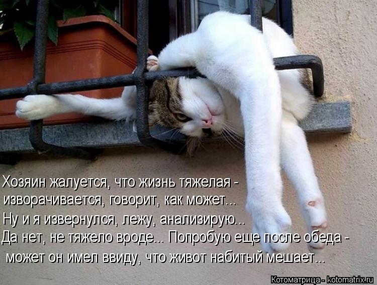 Котоматрица: Хозяин жалуется, что жизнь тяжелая - изворачивается, говорит, как может... Ну и я извернулся, лежу, анализирую... Да нет, не тяжело вроде... Попро