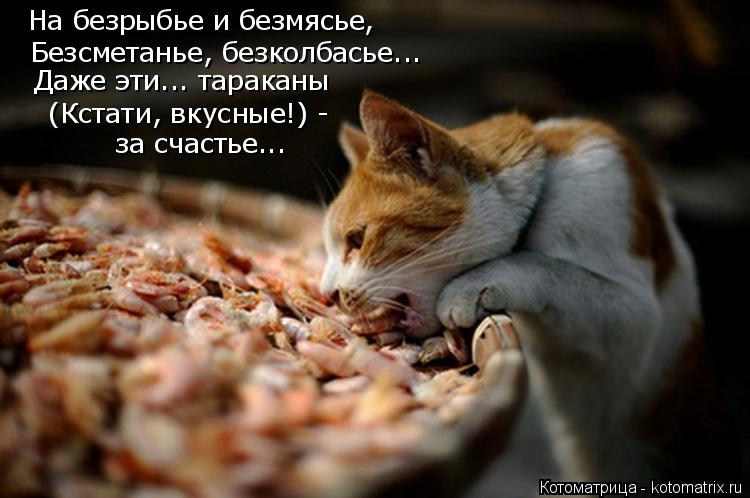 Котоматрица: На безрыбье и безмясье,  Безсметанье, безколбасье... Даже эти... тараканы  (Кстати, вкусные!) -  за счастье...