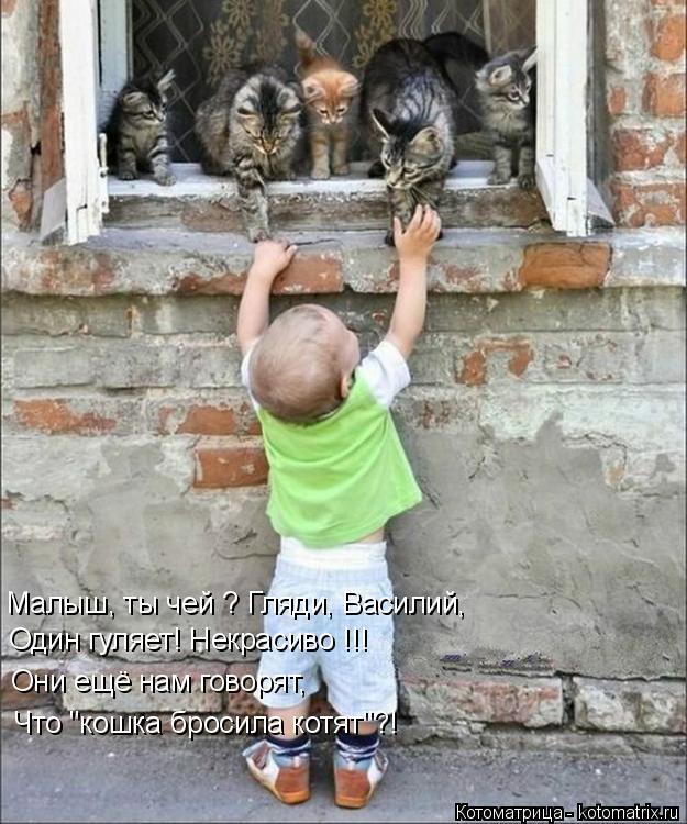 """Котоматрица: Малыш, ты чей ? Гляди, Василий, Один гуляет! Некрасиво !!! Они ещё нам говорят,  Что """"кошка бросила котят""""?!"""