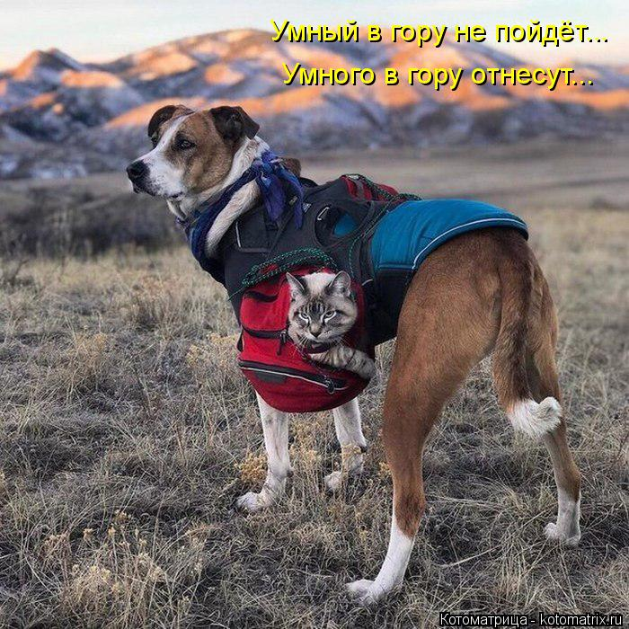 Котоматрица: Умный в гору не пойдёт... Умного в гору отнесут...