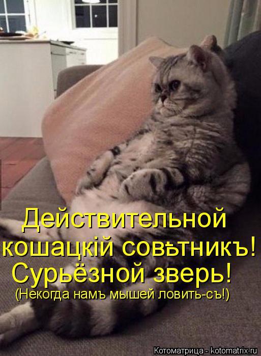 Котоматрица: Действительной Сурьёзной зверь! кошацкiй совьтникъ! - (Некогда намъ мышей ловить-съ!)