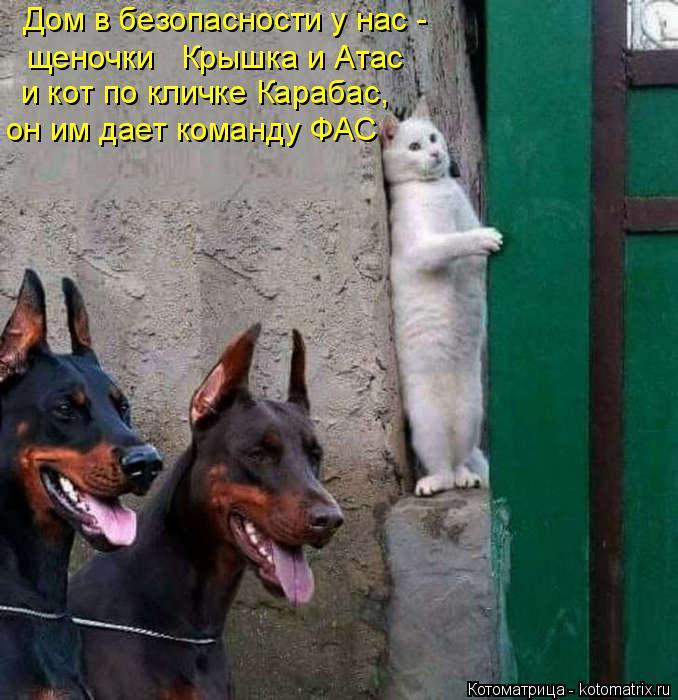 Котоматрица: Дом в безопасности у нас - щеночки   Крышка и Атас и кот по кличке Карабас, он им дает команду ФАС