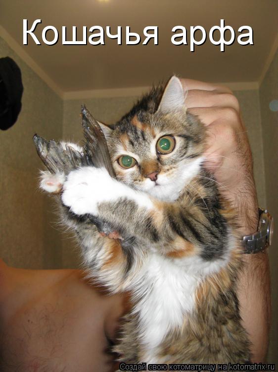 Котоматрица: Кошачья арфа