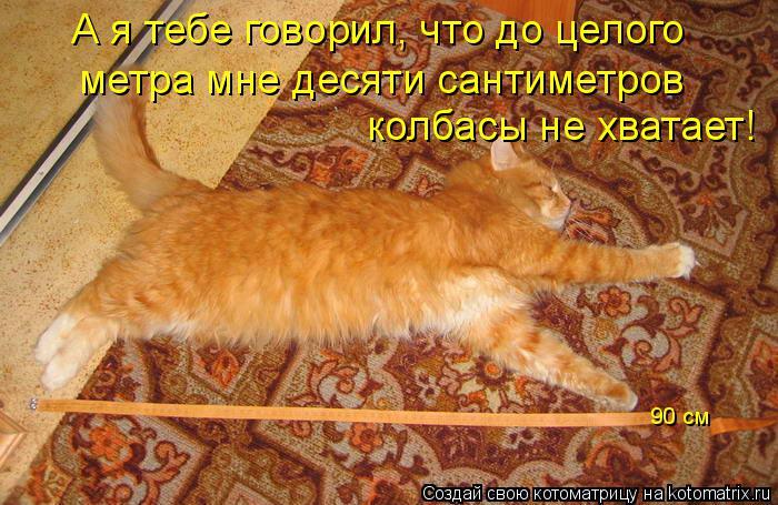 Котоматрица: А я тебе говорил, что до целого метра мне десяти сантиметров  колбасы не хватает! 90 см