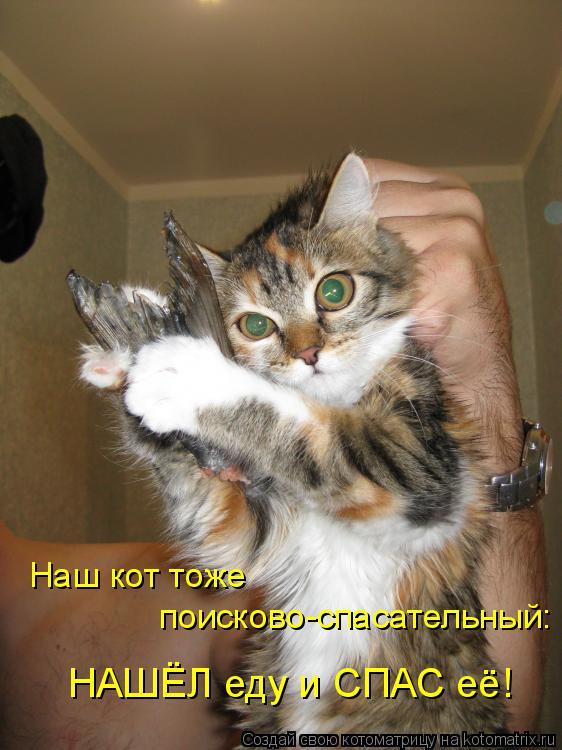 Котоматрица: поисково-спасательный: Наш кот тоже НАШЁЛ еду и СПАС её!