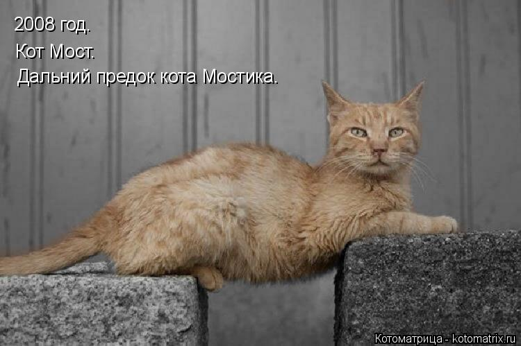 Котоматрица: 2008 год. Кот Мост. Дальний предок кота Мостика.