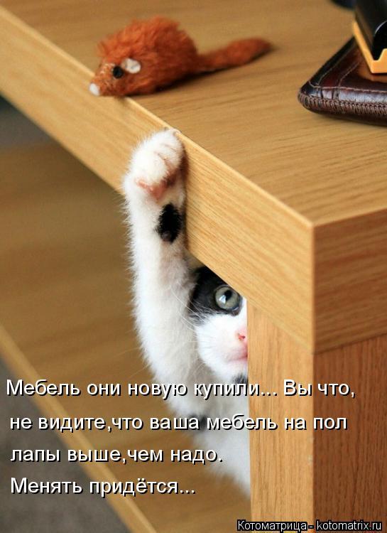 Котоматрица: Мебель они новую купили... Вы что, не видите,что ваша мебель на пол  лапы выше,чем надо. Менять придётся...