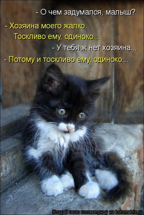 Котоматрица: - О чем задумался, малыш? - Хозяина моего жалко.  Тоскливо ему, одиноко... - У тебя ж нет хозяина... - Потому и тоскливо ему, одиноко...