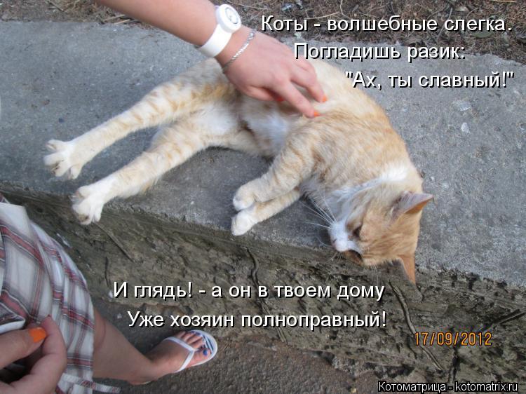 """Котоматрица: Коты - волшебные слегка. Погладишь разик:  """"Ах, ты славный!"""" И глядь! - а он в твоем дому Уже хозяин полноправный!"""