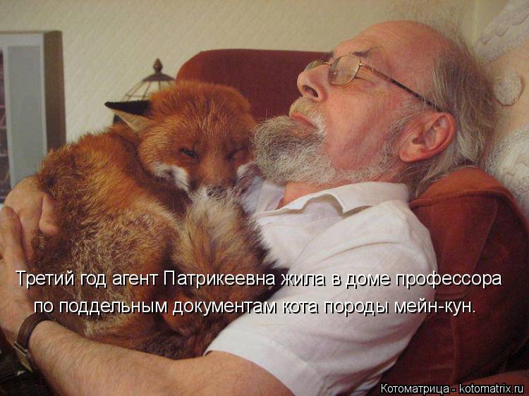 Котоматрица: Третий год агент Патрикеевна жила в доме профессора  по поддельным документам кота породы мейн-кун.