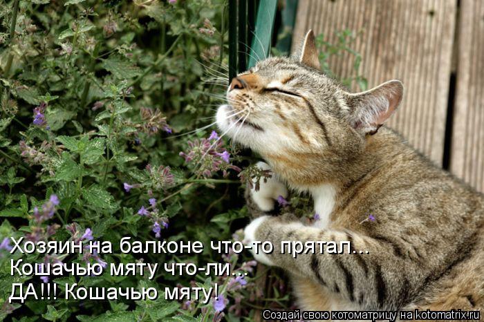 Котоматрица: Хозяин на балконе что-то прятал... Кошачью мяту что-ли... ДА!!! Кошачью мяту!