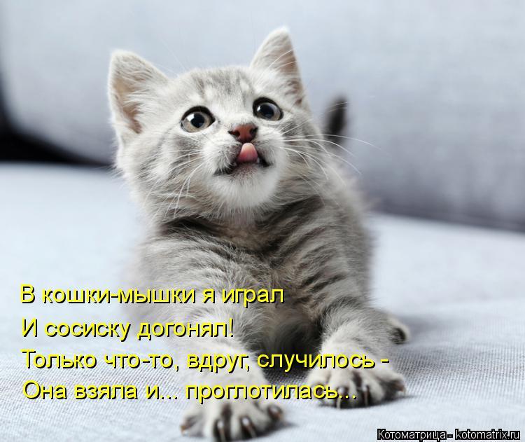 Котоматрица: В кошки-мышки я играл И сосиску догонял! Только что-то, вдруг, случилось - Она взяла и... проглотилась...