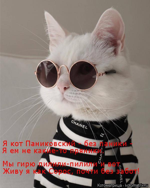 Котоматрица: Я кот Паниковский - без паники -  Я ем не какие-то пряники. Мы гирю пилили-пилили и вот Живу я как Сорос, почти без забот!