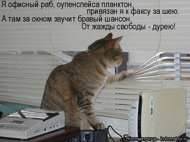 Котоматрица: Я офисный раб, оупенспейса планктон, привязан я к факсу за шею. А там за окном звучит бравый шансон, От жажды свободы - дурею!