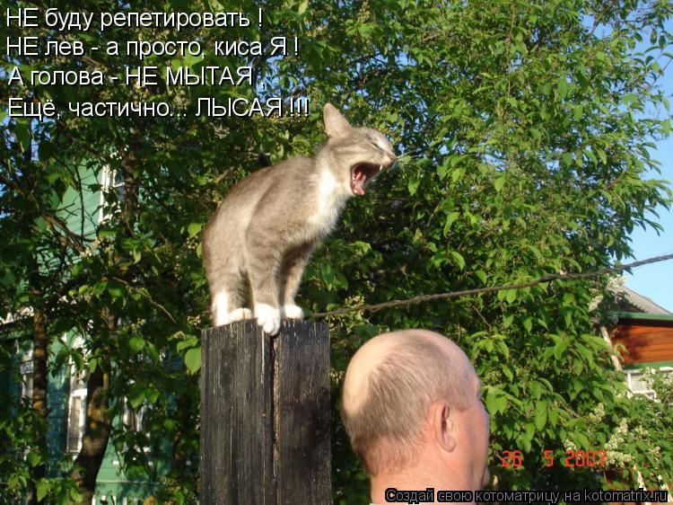 Котоматрица: НЕ буду репетировать ! А голова - НЕ МЫТАЯ , Ещё, частично... ЛЫСАЯ !!! НЕ лев - а просто, киса Я !