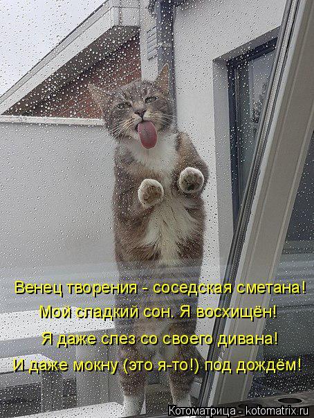 Котоматрица: Венец творения - соседская сметана! Мой сладкий сон. Я восхищён! Я даже слез со своего дивана! И даже мокну (это я-то!) под дождём!