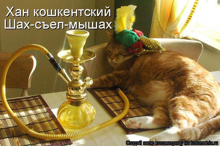 Котоматрица: Хан кошкентский Шах-съел-мышах