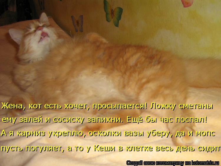 Котоматрица: Жена, кот есть хочет, просыпается! Ложку сметаны  ему залей и сосиску запихни. Ещё бы час поспал! А я карниз укреплю, осколки вазы уберу, да и м