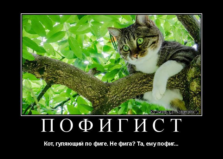 Котоматрица: ПОФИГИСТ Кот, гуляющий по фиге. Не фига? Та, ему пофиг...