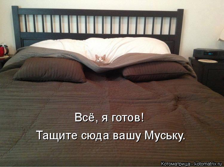 Котоматрица: Всё, я готов! Тащите сюда вашу Муську.