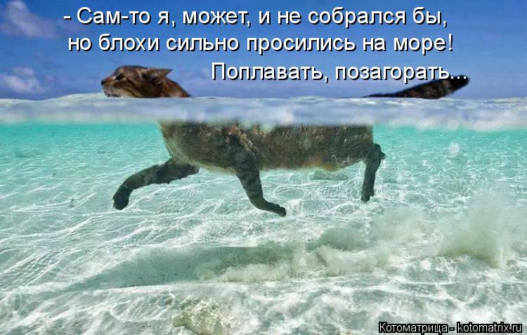 Котоматрица: - Сам-то я, может, и не собрался бы, но блохи сильно просились на море! Поплавать, позагорать...