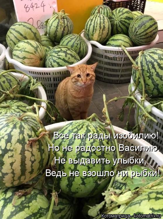 Котоматрица: Все так рады изобилию! Но не радостно Василию. Не выдавить улыбки, Ведь не взошло ни рыбки!