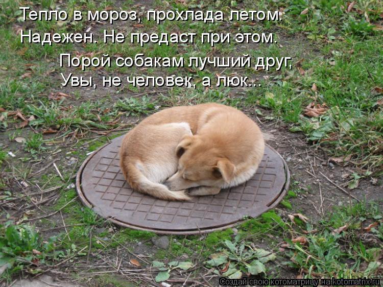 Котоматрица: Тепло в мороз, прохлада летом. Надежен. Не предаст при этом. Порой собакам лучший друг, Увы, не человек, а люк...