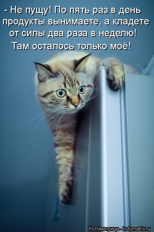 Котоматрица: - Не пущу! По пять раз в день продукты вынимаете, а кладете  от силы два раза в неделю! Там осталось только моё!
