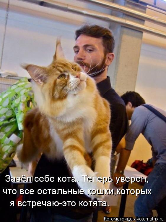 Котоматрица: Завёл себе кота. Теперь уверен, что все остальные кошки,которых я встречаю-это котята.
