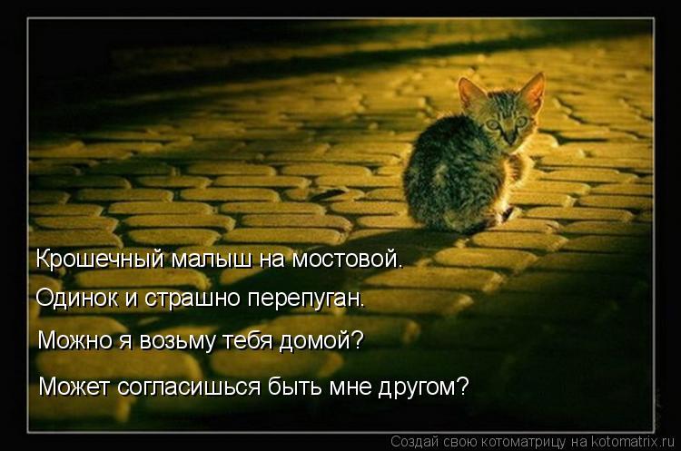 Котоматрица: Крошечный малыш на мостовой. Одинок и страшно перепуган. Можно я возьму тебя домой? Может согласишься быть мне другом?