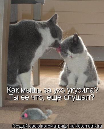Котоматрица: Как мышь за ухо укусила? Ты ее что, еще слушал?