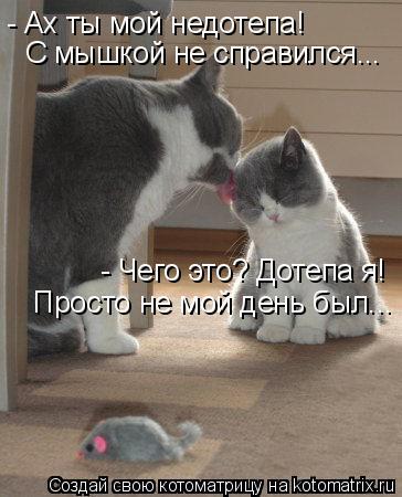 Котоматрица: - Ах ты мой недотепа!  С мышкой не справился... - Чего это? Дотепа я! Просто не мой день был...