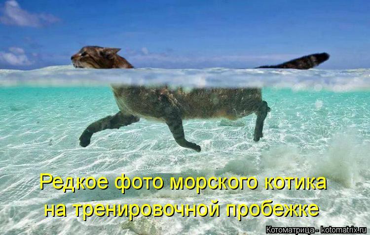 Котоматрица: Редкое фото морского котика на тренировочной пробежке
