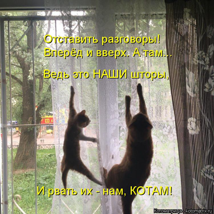 Котоматрица: Отставить разговоры! Вперёд и вверх. А там... Ведь это НАШИ шторы, И рвать их - нам, КОТАМ!
