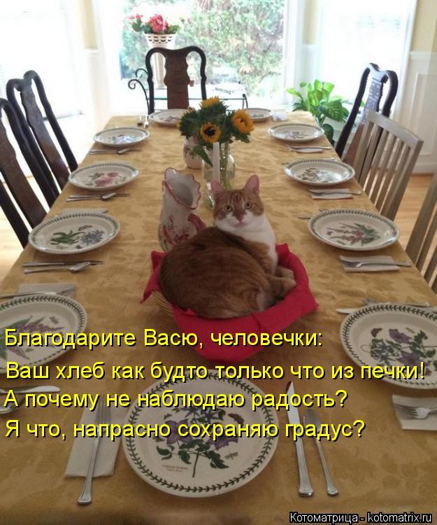 Котоматрица: Благодарите Васю, человечки: Ваш хлеб как будто только что из печки! А почему не наблюдаю радость? Я что, напрасно сохраняю градус?