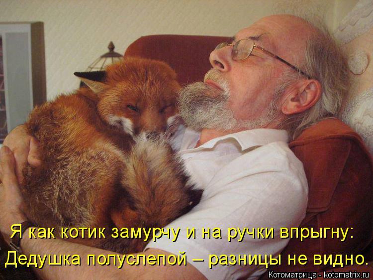 Котоматрица: Дедушка полуслепой – разницы не видно. Я как котик замурчу и на ручки впрыгну: