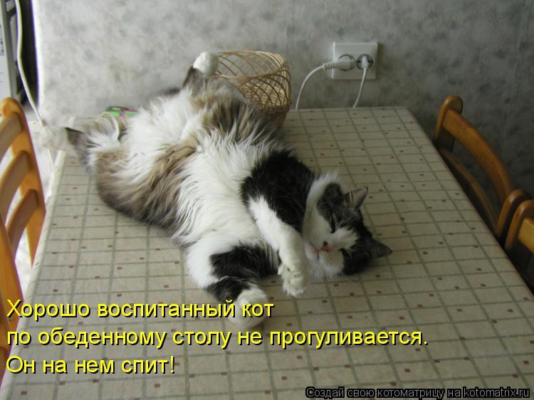 Котоматрица: Хорошо воспитанный кот  по обеденному столу не прогуливается. Он на нем спит!