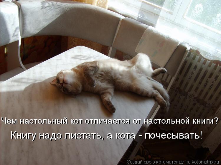 Котоматрица: Чем настольный кот отличается от настольной книги? Книгу надо листать, а кота - почесывать!