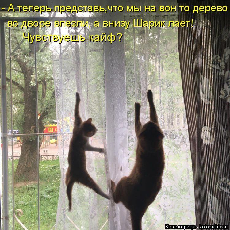 Котоматрица: - А теперь представь,что мы на вон то дерево во дворе влезли, а внизу Шарик лает!  Чувствуешь кайф?