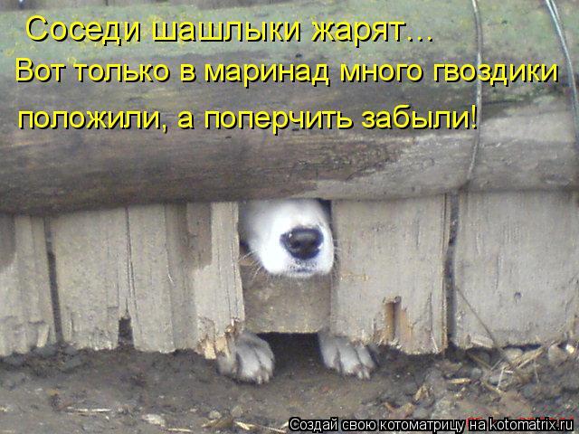 Котоматрица: Соседи шашлыки жарят… Вот только в маринад много гвоздики положили, а поперчить забыли!